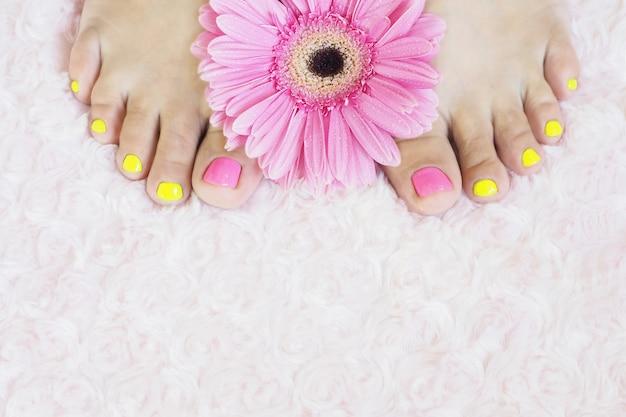 Pieds de femmes avec pédicure brillante sur un tapis de fourrure rose et gerbera rose vif avec des gouttes. Photo Premium