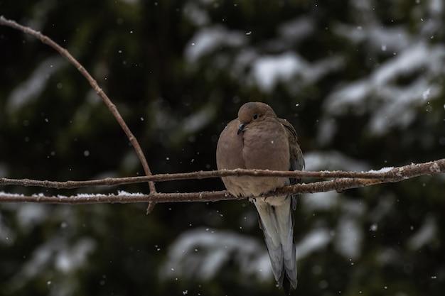Pigeon Assis Sur Une Fine Branche D'un Arbre Sous La Neige Photo gratuit
