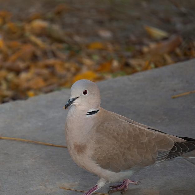 Le pigeon dans le parc en pleine nature Photo Premium