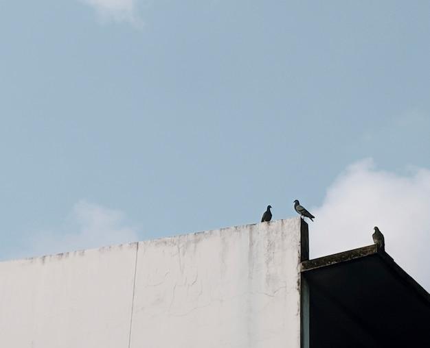 Pigeons sur un toit Photo gratuit