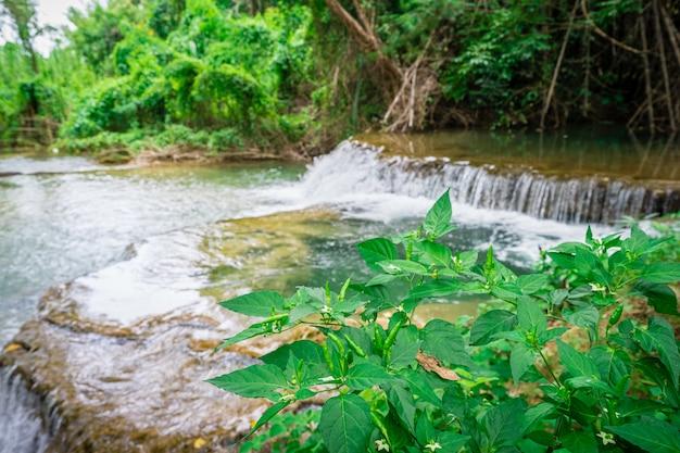 Piments verts sur l'arbre avec fond de cascade Photo Premium