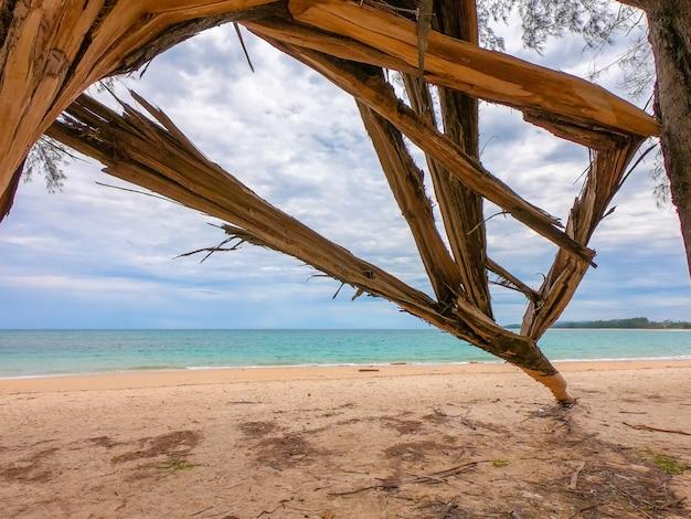 Pin cassé près de la plage. Photo Premium