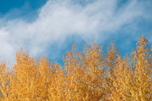 Pin Et Ciel Bleu Automne à Leh Ladakh, Inde Photo gratuit