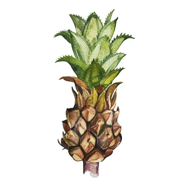 Pineapplelooking at shelfs set tropical, croquis aquarelle Photo Premium