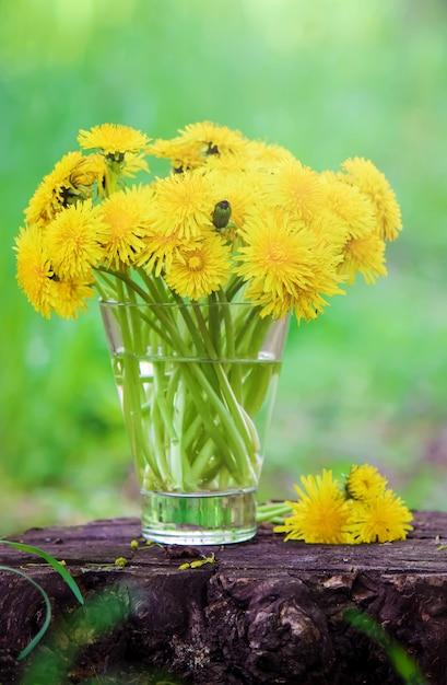 Pissenlits jaunes en fleurs dans le bouquet. mise au point sélective. Photo Premium