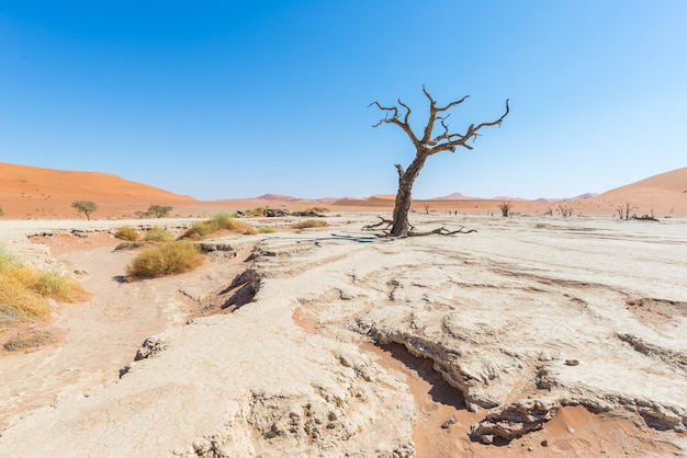 Le pittoresque sossusvlei et deadvlei, argile et casserole de sel avec acacias tressés Photo Premium