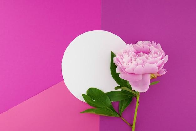 Pivoine éponge avec feuilles et assiette blanche Photo Premium