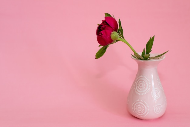 Pivoines de bourgogne sur rose Photo Premium
