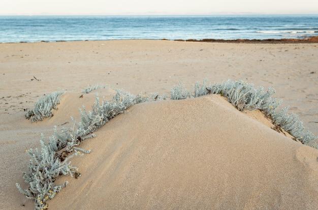 Plage avec des dunes de sable et de l'herbe marram à la lumière du coucher du soleil Photo Premium