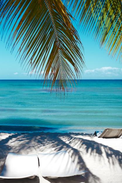 Plage D'été Tropicale Avec Branche D'arbre De Feuille De Palmier Mer Et Ciel Photo gratuit