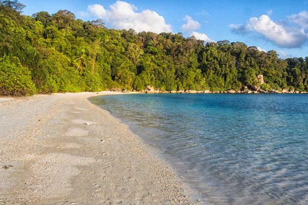 Plage de sable blanc avec jungle Photo Premium