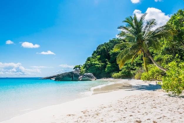 Plage tropicale de sable blanc Photo gratuit