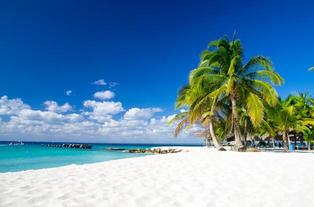 Plage Tropicale Photo Premium