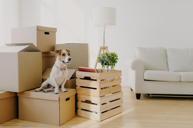 Plan intérieur d'un petit chien de race posé sur des boîtes en carton, enlevé dans une nouvelle demeure avec les propriétaires Photo Premium