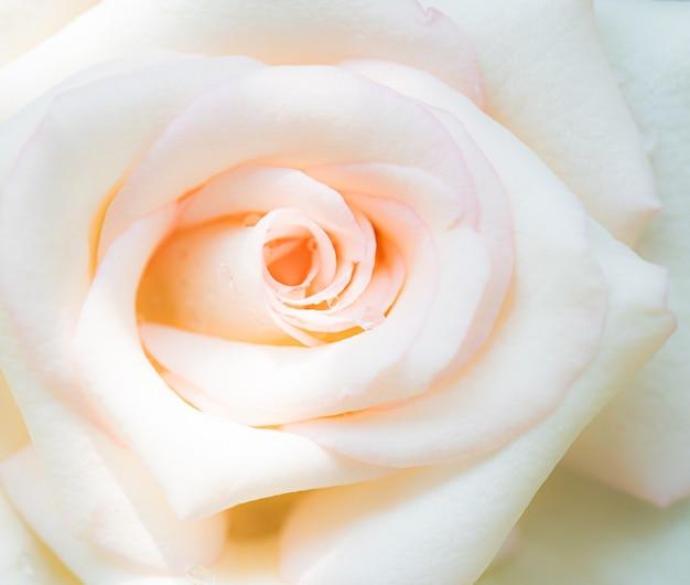 Plan Macro De Fleur Rose, Fond De Nature Photo Premium