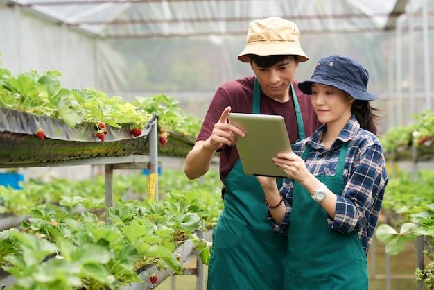 Plan moyen de deux collègues de la ferme faisant face à la caméra, debout dans la serre et regardant l'écran d'une tablette pc Photo gratuit