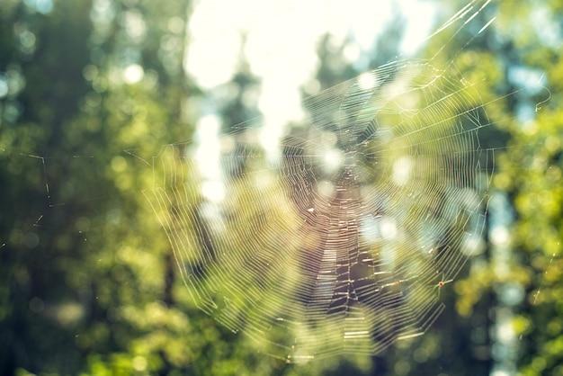 Plan Rapproché De Toile D'araignée Contre Dans La Forêt Sur Fond De Nature Verte Jour D'été Photo Premium