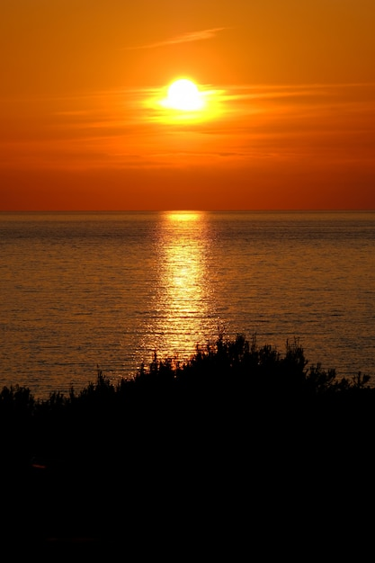 Plan Vertical D'une Silhouette D'arbres Près De La Mer Reflétant Le Soleil Photo gratuit