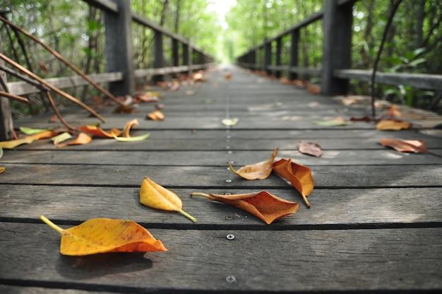 Planche de bois à pied sur la forêt de mangrove Photo Premium