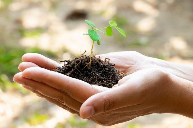 Plant de germination et sol tenant dans les mains. la croissance et la prévention des arbres par l'homme. Photo Premium