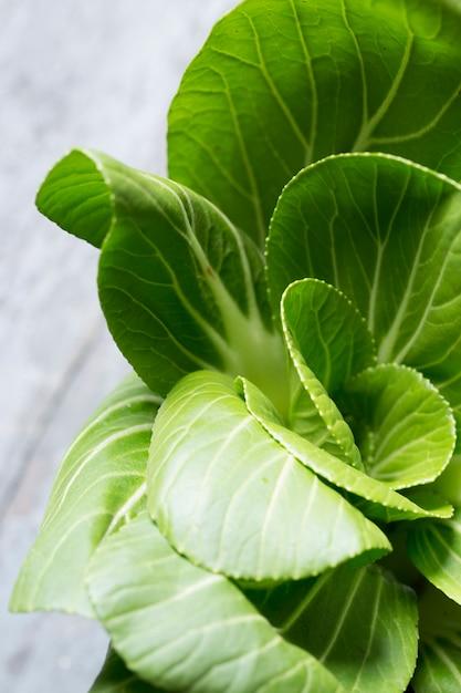 Plant de laitue à manger Photo Premium