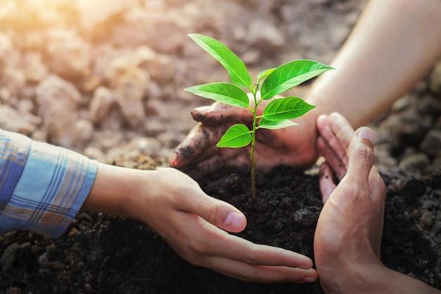 Plantation d'arbres de protection des agriculteurs à trois mains sur sol avec soleil dans le jardin Photo Premium