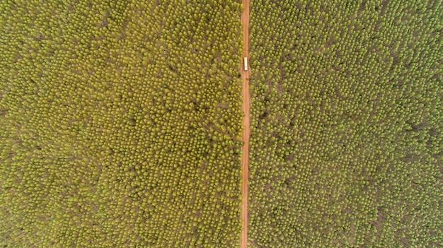 Plantation d'eucalyptus, vue d'en haut. forêt d'eucalyptus. Photo Premium