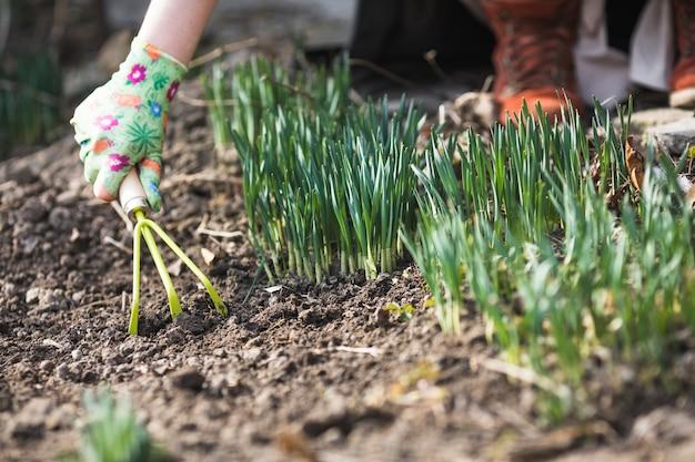 Plantation des mains Photo gratuit