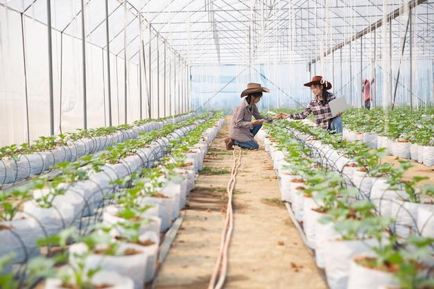 Plantation de melons avec ouvriers Photo gratuit