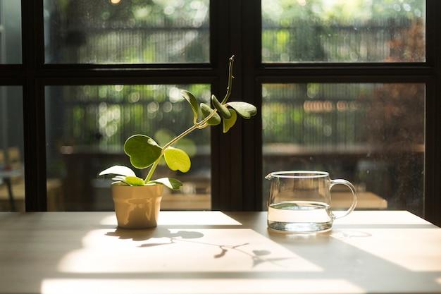 Plante essayant d'obtenir de l'eau dans un bocal en verre Photo Premium