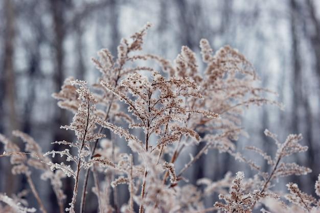 Plante gelée en face de la forêt. hiver saisonnier Photo Premium