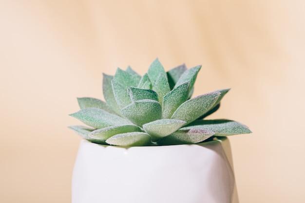 Plante D'intérieur Succulente Artificielle En Pot, Macro Photo Premium