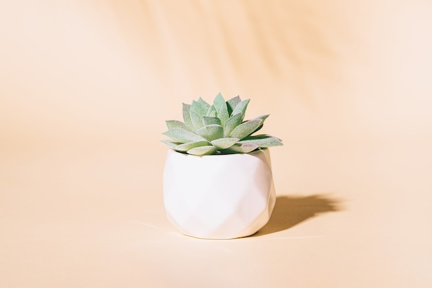 Plante D'intérieur Succulente Artificielle En Pot Photo Premium
