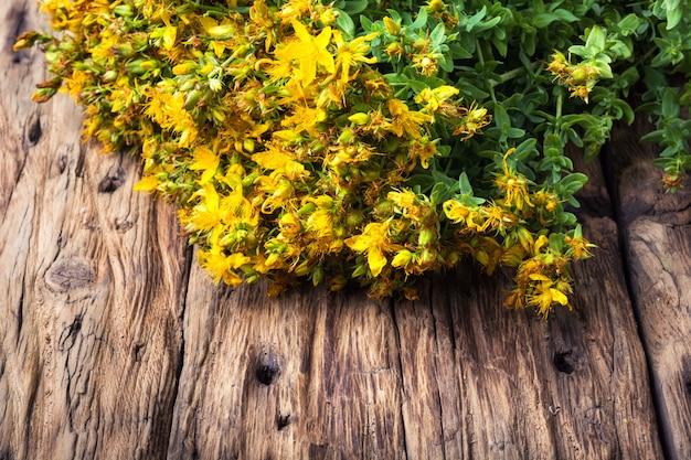 Plante médicinale aux fleurs Photo Premium