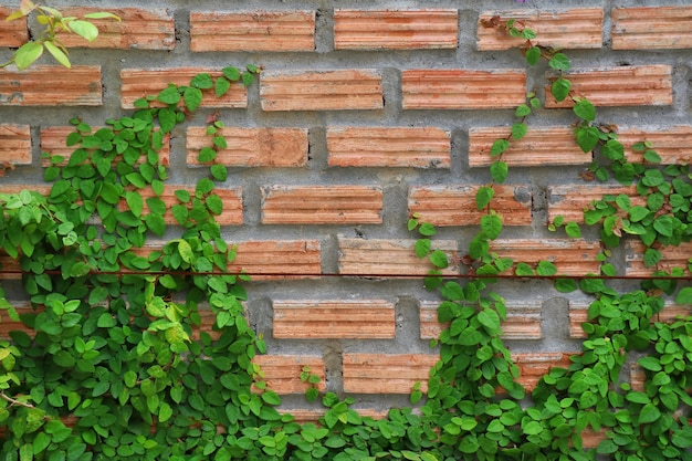 La Plante Sur Le Mur De Briques Rouges. Flou Artistique Concept De Fond |  Photo Premium