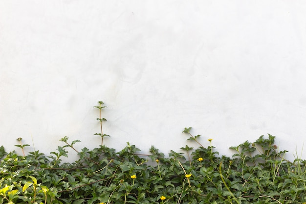 La plante de plante grimpante verte sur le mur Photo Premium