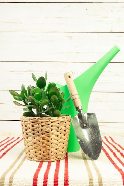 Plante en pot dans une table Photo Premium