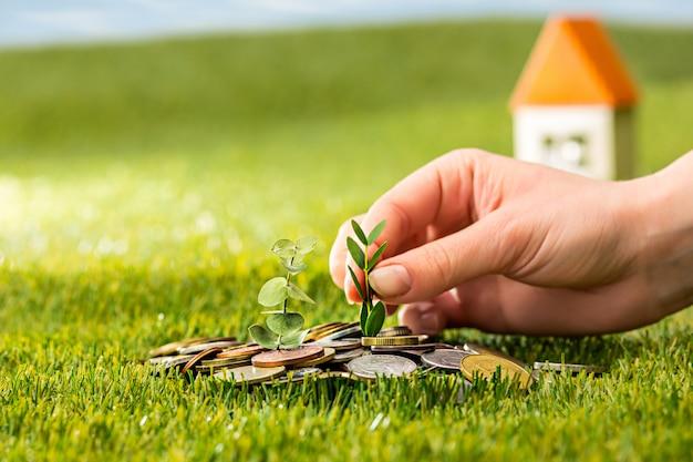 Plante Poussant Dans Des Pièces En Pot De Verre Pour De L'argent Sur L'herbe Verte Photo gratuit