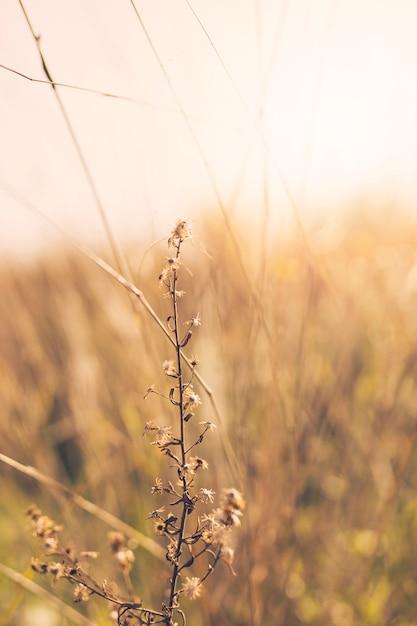 Plante sèche en face de l'arrière-plan flou Photo gratuit