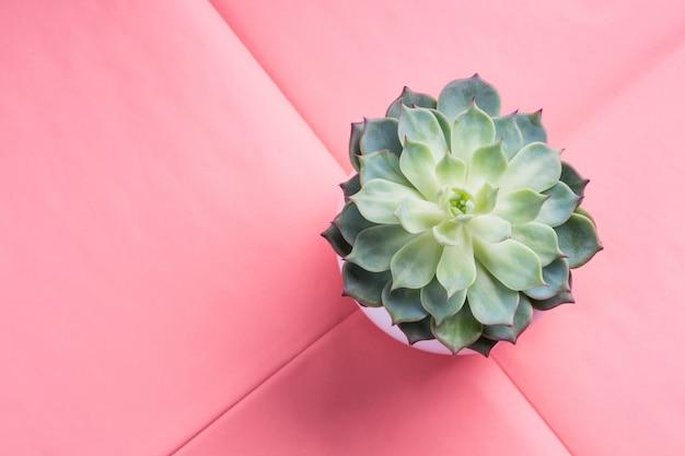 Plante succulente en pot sur papier déplié rose Photo Premium