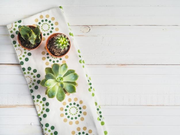 Plante succulente en pot sur la serviette au-dessus du tableau blanc Photo gratuit