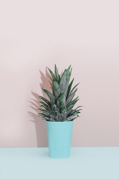 Plante tropicale décor à la maison moderne. cactus sur fond bleu rose. le minimalisme est à plat. Photo Premium