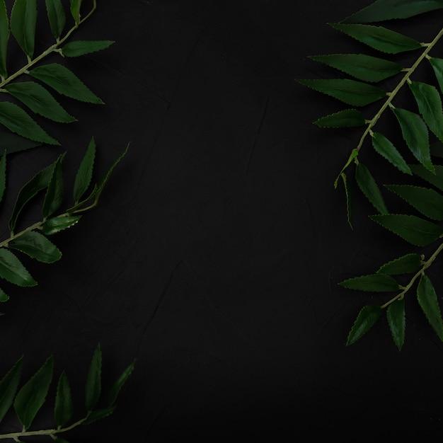 Plante tropicale avec des feuilles vertes, ton sur fond noir Photo gratuit
