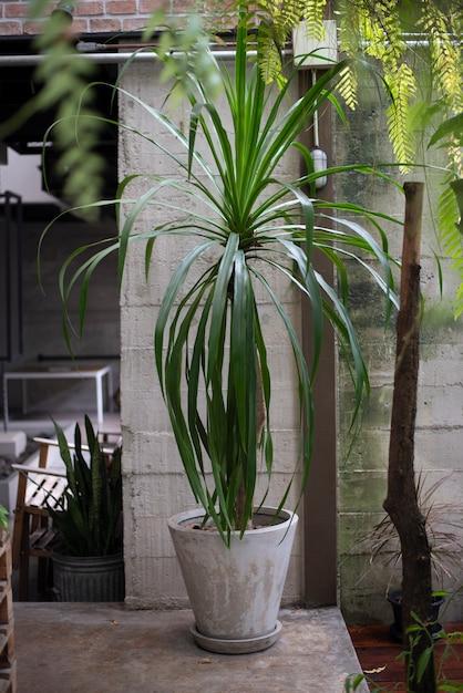 Plante verte dans la cour Photo Premium