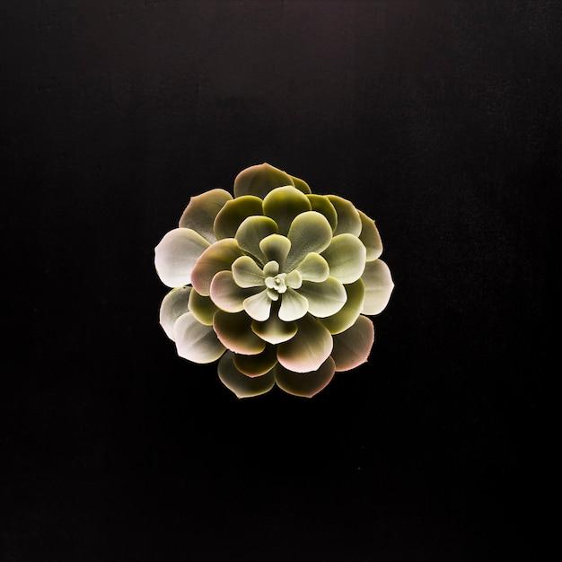 Plante verte sur fond noir Photo gratuit
