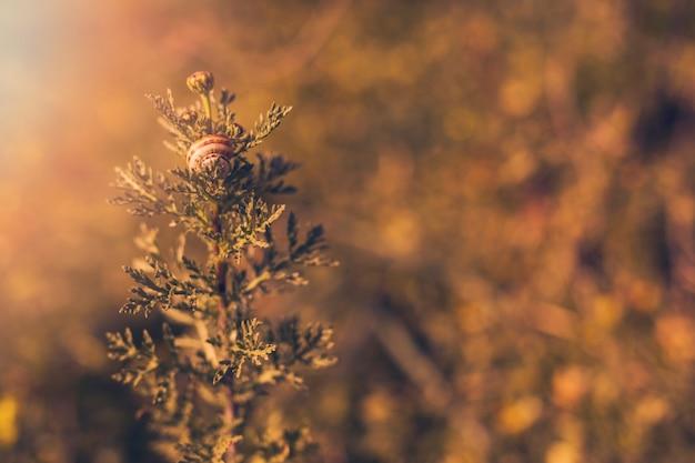 Planter au soleil avec un escargot Photo gratuit
