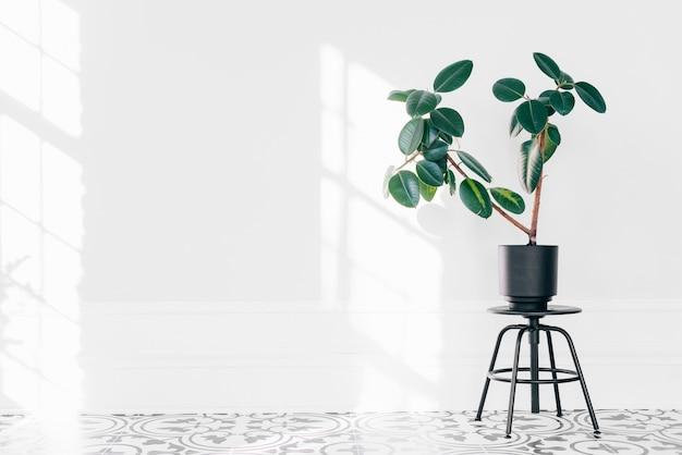 Planter sur une chaise noire Photo gratuit