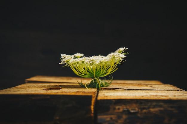 Planter l'eryngium sur des blocs de bois sur un fond noir. fleurs épineuses. Photo Premium