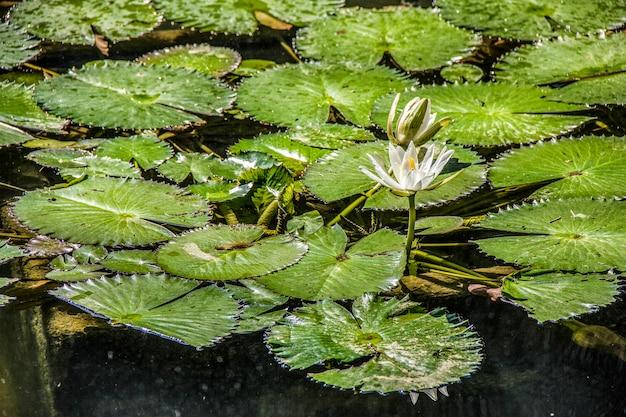 Plantes d'extérieur brésiliennes Photo Premium