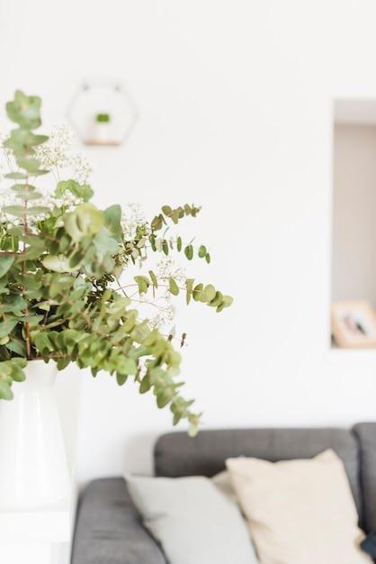 Plantes et fleurs décoratives dans une maison Photo gratuit